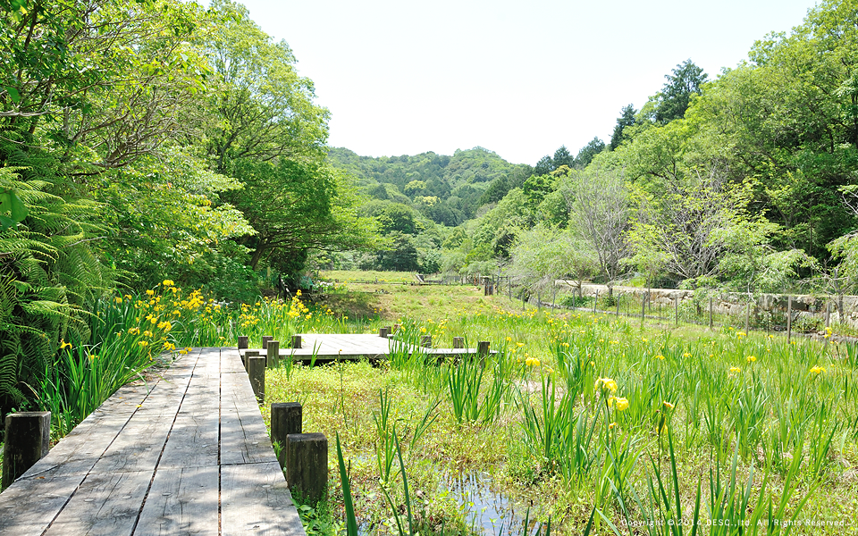 yokoyama_16_s1